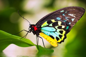 Cairns: Australian Butterfly Sanctuary