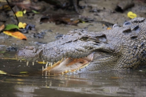 Cairns: Daintree Rainforest Wildlife Experience Cruise