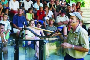 Cairns: Hartley's Crocodile Adventures Visit with Transfer