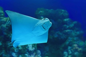 Cairns: Marine Life Encounter with 2-Course Lunch