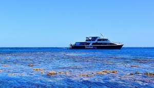Calypso Pure Snorkelling