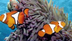 Calypso Snorkel & Dive