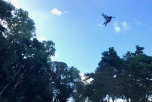 From Cairns: AJ Hackett Giant Jungle Swing Experience