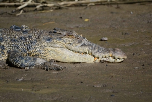 From Cairns: Daintree National Park Day Trip and Night Tour