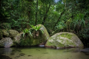 From Cairns: Daintree National Park Private Tour