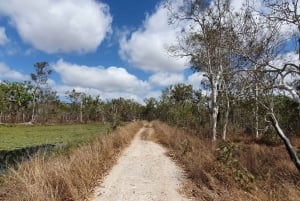From Cairns: Full-Day Birdwatching Excursion