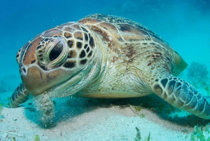 From Cairns: Premium Great Barrier Reef Snorkeling & Diving