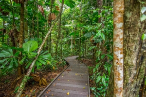 From Daintree National Park Day Trip and Night Tour
