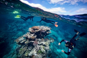 From Great Barrier Reef Snorkeling Experience