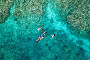 From Premium Great Barrier Reef Snorkeling & Diving