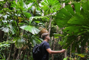 Go Wild in Queensland Full-Day Tour to Cape Tribulation