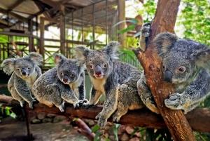 Kuranda, Cairns & Port Douglas 4-Park Package