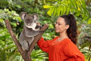 Kuranda Koala Gardens Entrance Ticket