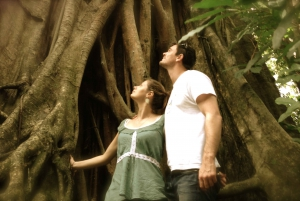 Port Douglas: Daintree National Park Boutique Tour