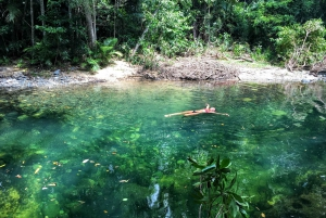 Reef Helicopter Flight and Daintree Rainforest Tour