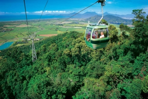 Skyrail Rainforest Cableway & Kuranda Rail Self-Drive
