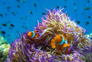 Snorkel & Dive a Secluded Great Barrier Reef Island