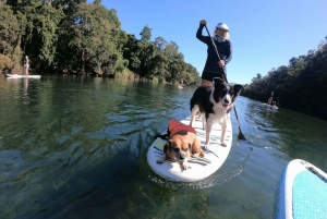 Standup Paddleboard Tour in Goldsborough Valley
