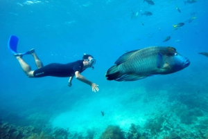 Ultimate Great Barrier Reef Cruise with Marine World Pontoon