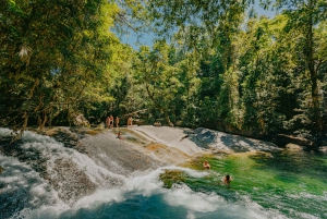 Waterfall, Wildlife and Rainforest Tour from Cairns