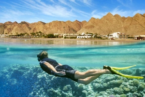 Day Tour to the Red Sea with Lunch