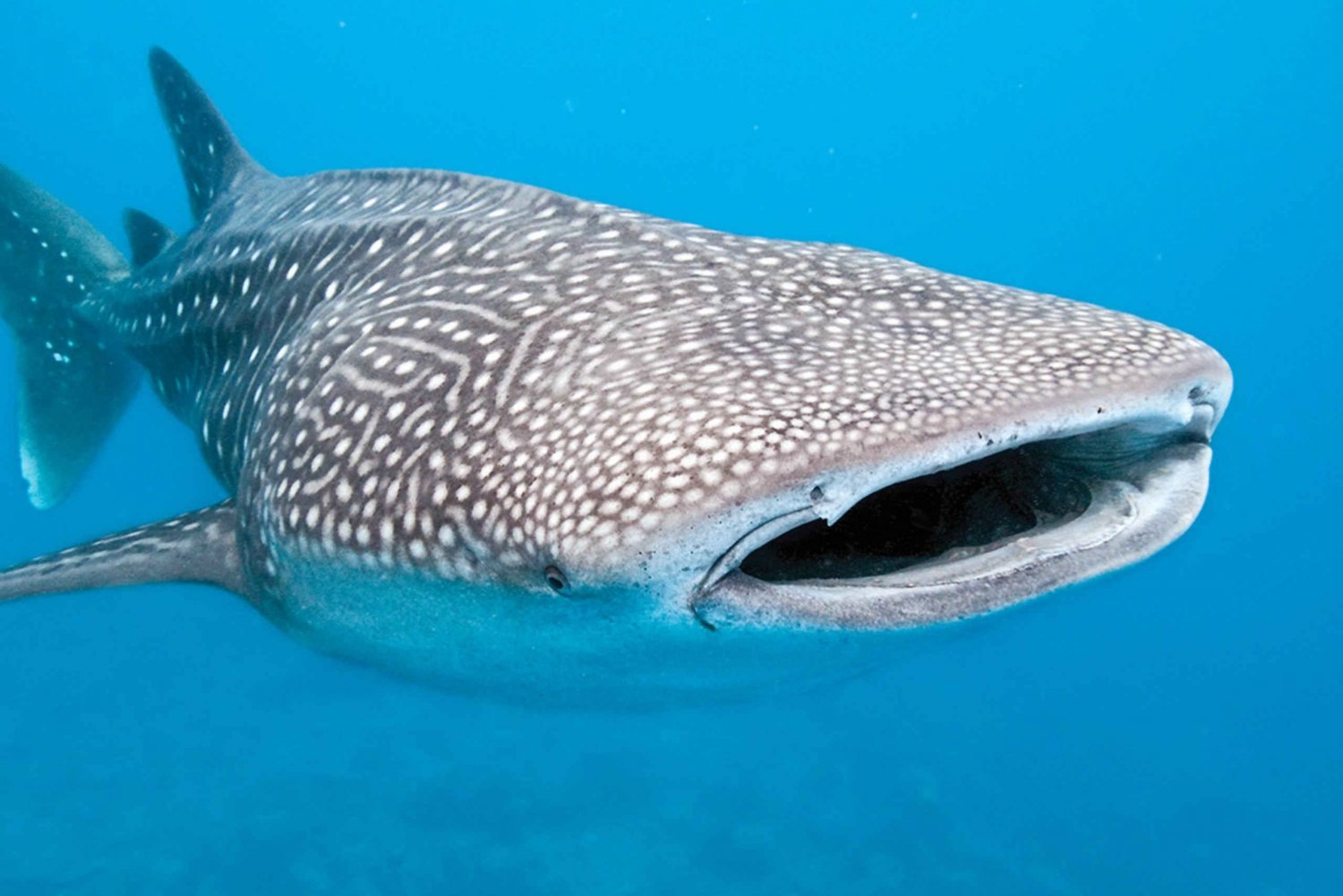 Cancún Whale Shark 7-Day Adventure Tour