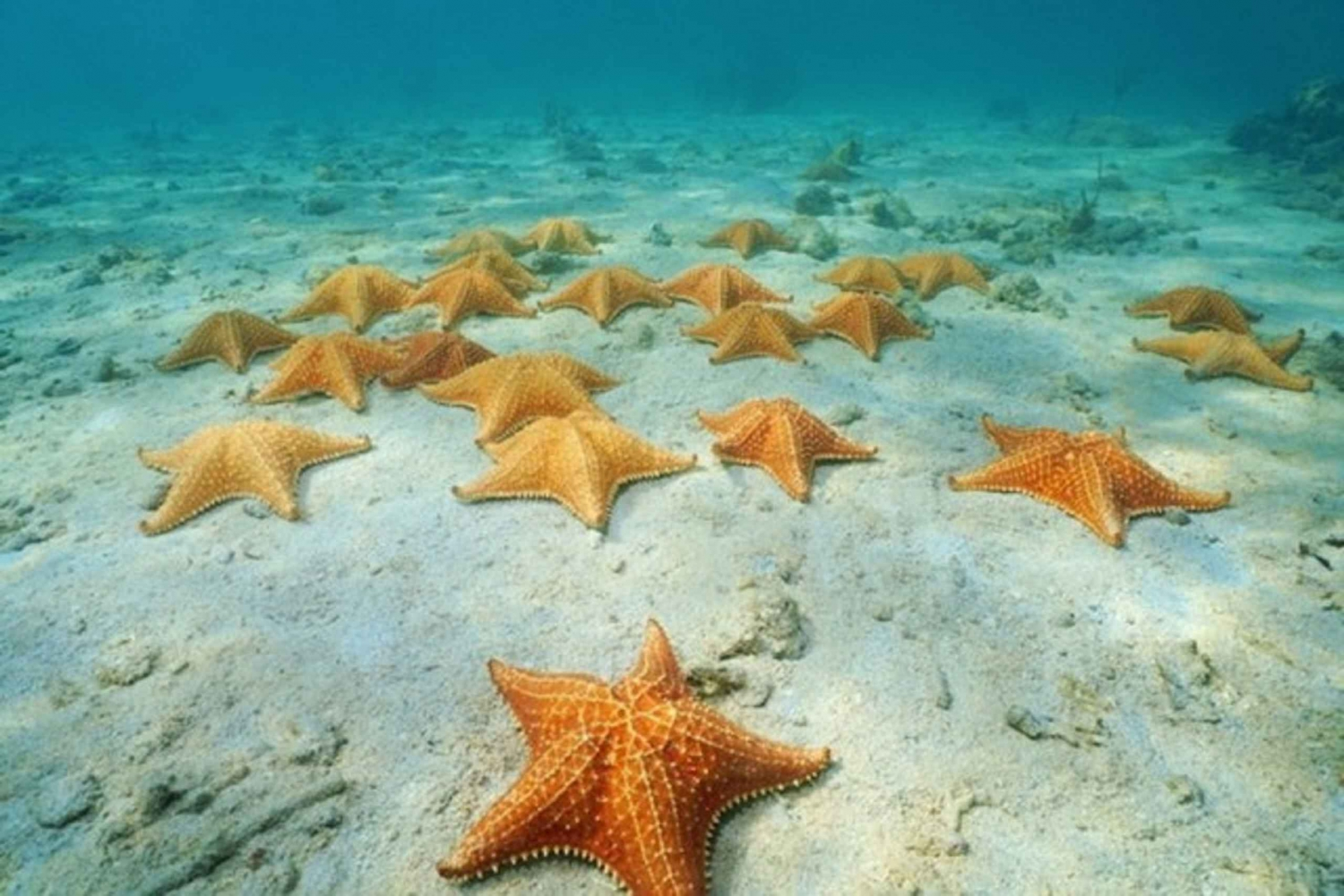 Cozumel: Reef Adventure with Snorkeling and Lunch