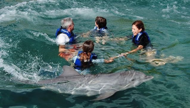 Delphinus Dreams Cancun