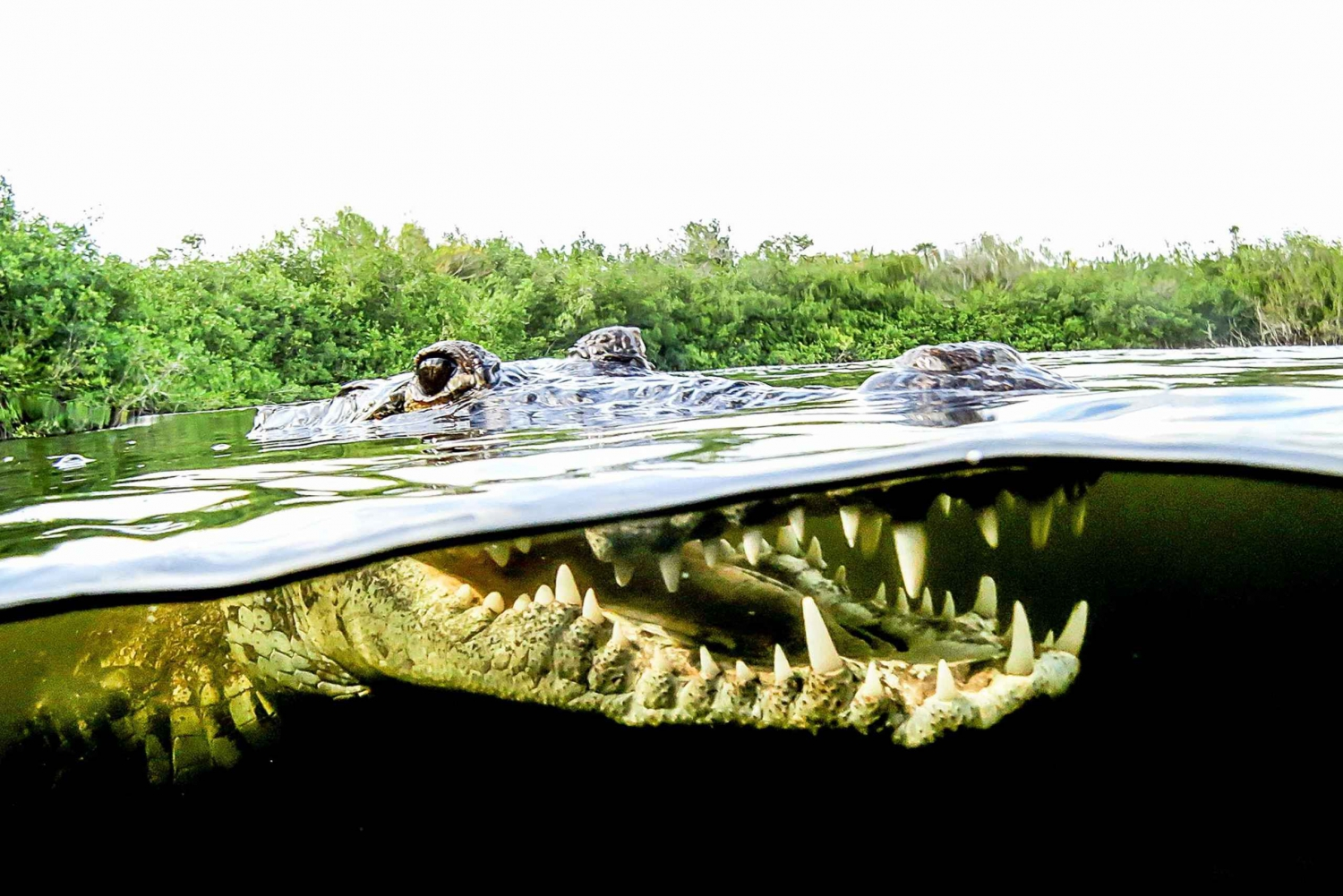 Swim with Crocodiles and Visit a Mayan Community