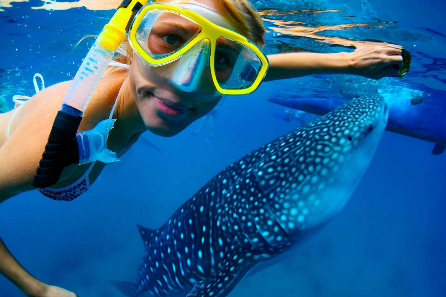 Swim with Whale Sharks from Playa del Carmen or Cancun