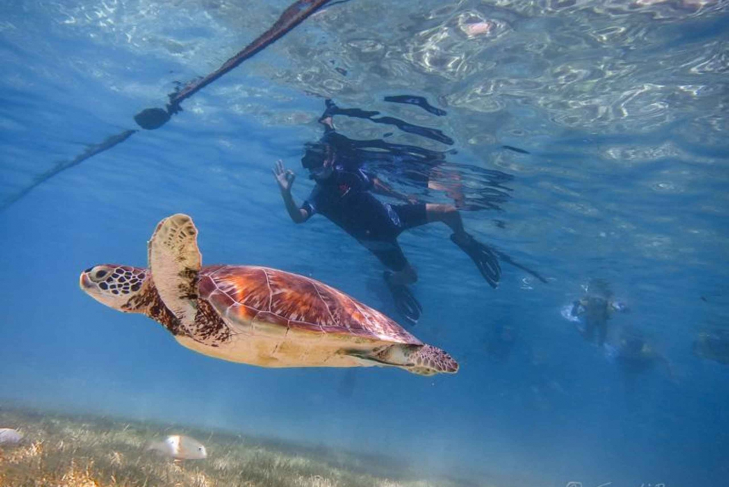 Turtles and Cenotes Tour
