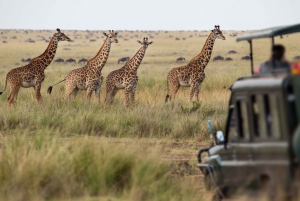 2-Day Safari at Inverdoorn Game Reserve
