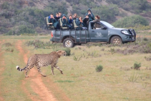 2-Day Safari Experience at Garden Route Game Lodge
