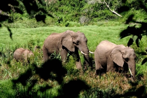 3-Day Garden Route and Safari from Cape Town