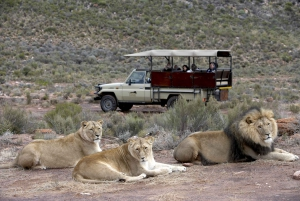 Aquila Game Reserve: Afternoon Safari