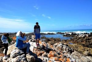 Cape Agulhas Tour from Cape Town