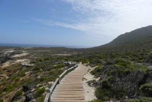 Cape Peninsula and Penguin Colony Full Day Shared Tour
