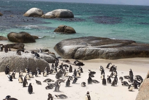 Cape Peninsula: Cycle & Drive Private Full Day Tour