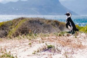 Cape Peninsula Private Half-Day Tour
