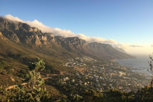 Cape Peninsula Shared Half-Day Tour