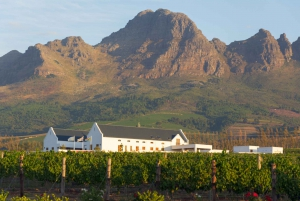 Cape Point Highlights Tour with Wine Tasting in Stellenbosch
