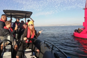 Cape Town: 1.5-Hour Sunset Boat Tour with Gin Tasting