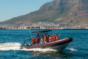 Cape Town: 1-Hour Sunrise Ocean Safari