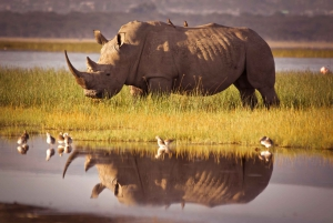 Cape Town: 2-Day Safari at Inverdoorn Game Reserve