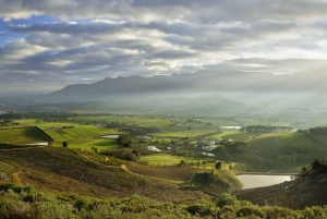 Cape Town: Cape Peninsula and Winelands Full Day Combo Tour