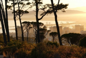Cape Town: City Tour with a Local Guide