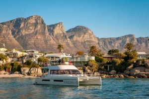 Cape Town: Coastal Catamaran Cruise