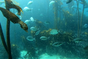 Cape Town: Discover Scuba Diving Experience