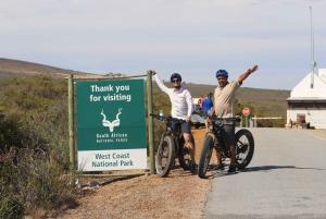 Cape Town: Guided e-Bike Safari Tour