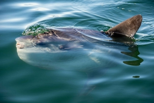 Cape Town: Guided Marine Wildlife Cruise and Cape Point Tour